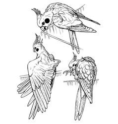 Parrots three vector