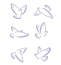 white doves vector image