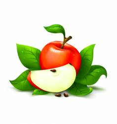 apple with leafs vector image