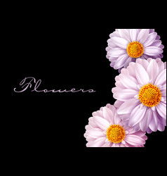 pink flowers isolated on black background vector image vector image