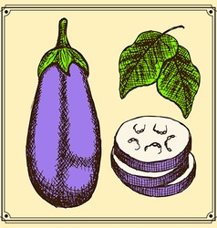 Sketch eggplant set in vintage style vector image vector image