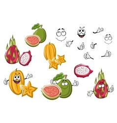 Cartoon fresh tropical fruits characters vector