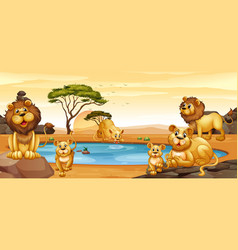 Lions living by the pond vector