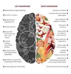 Brain left and right hemispheres infographics vector