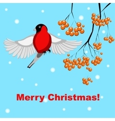 Christmas card with bullfinch and rowan vector