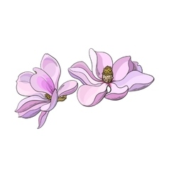 Two pink magnolia flowers sketch vector image