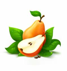 Fresh pear with cut vector