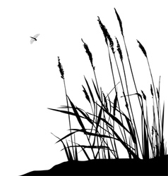 Reeds and dragonfly vector image