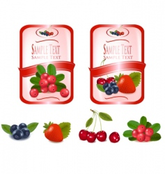 Two labels with cranberries vector