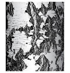Bark of birch in the cracks texture vector