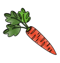 Drawing carrot food nutrition vector