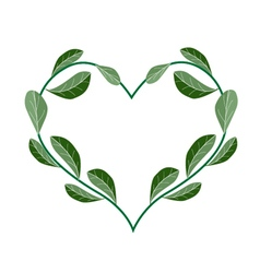 Fresh evergreen leaves in a heart shape vector