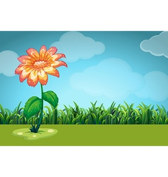 Scene with orange flower in the field vector image