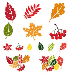 Autumn leaves set Flat style vector image