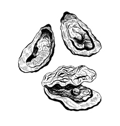 Oysters vintage set vector
