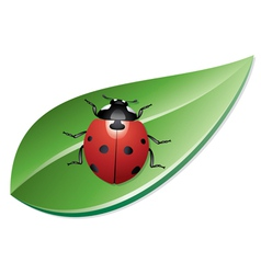 Ladybird on a leaf vector