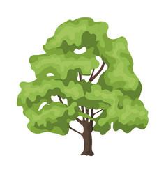 Canadian maple canada single icon in cartoon vector