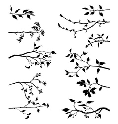 set of tree branches with leaves and berries vector image