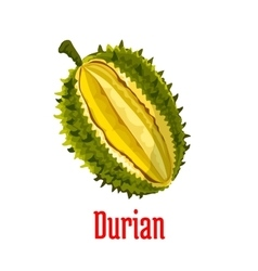 Durian exotic fruit isolated object vector