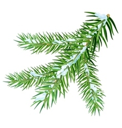 Snow lies on spruce branch vector image