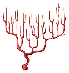 A red coral vector image