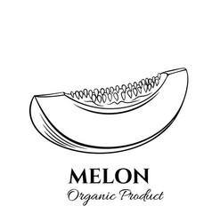hand drawn melon icon vector image vector image