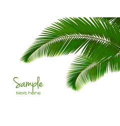 Palm leaves on white background vector image vector image