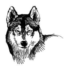 Hand sketch head husky vector image