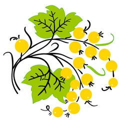 Bunch of yellow currant ripe berry vector