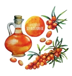 Watercolor sea buckthorn oil jar and berries vector