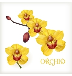 Yellow orchid set vector