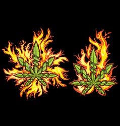 Marijuana cannabis leaf fire flames background vector