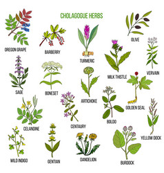 Cholagogue herbs hand drawn set vector