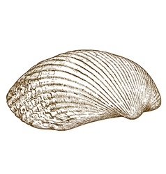 engraving clam shell vector image