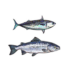 sketch cartoon sea fish salmon tuna set vector image