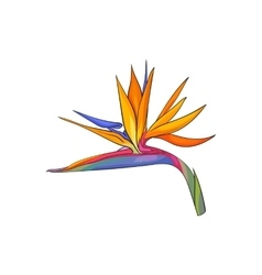 Single bird of paradise strelizia tropical flower vector image vector image