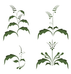 Silhouettes of plants vector