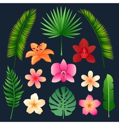 Tropical flowers and palm trees leaves set vector