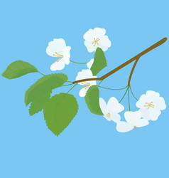 Blossoming apple tree spring twig on blue vector