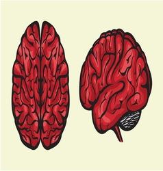 brain dve hemisferecolor resize vector image