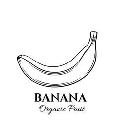 hand drawn banana icon vector image vector image