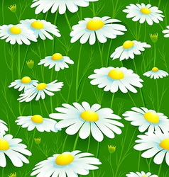 Camomiles seamless pattern vector