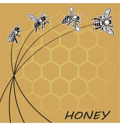 bee and honey background vector image vector image