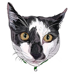 Hand drawn kitty face white grey vector