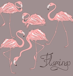 Isolated flamingos in different positions vector