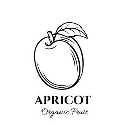 hand drawn apricot icon vector image vector image
