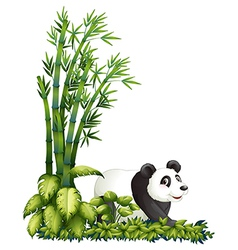 Cartoon panda hiding vector
