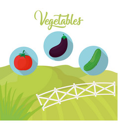 Vegetables fresh farm agriculture vector