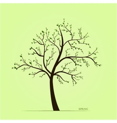 Spring tree with leaves vector