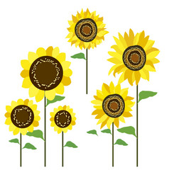 colored sunflowers vector image vector image
